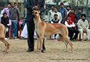 Amritsar 2011 | ex-210,great dane,sw-46,