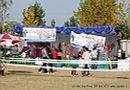 Amritsar Dog Show 2012 | ground stall,pug,sw-65,