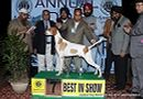 Amritsar Dog Show 2012 | line up,sw-65,