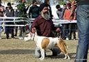 Amritsar Dog Show 2012 | ex-57,staffordshire bull terrier,sw-65,