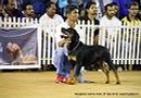 Bangalore Canine Club 2014   rottweiler,sw-138,