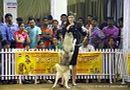 Bangalore Canine Club 2014   sw-138,