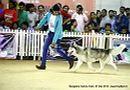 Bangalore Canine Club 2014   ex-369,siberian husky,sw-138,