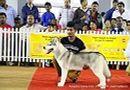 Bangalore Canine Club 2014   ex-371,siberian husky,sw-138,