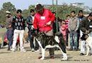 Bareilly Dog Show 2011 | sw-14, akita,ex-27,