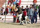 Bareilly Dog Show 2011 | sw-14, akita,ex-28,