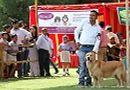 Capital Kennel Club - 2014 | golden retriever,sw-128,