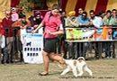 Chandigarh Dog Show 2013 | ex-45,fox terrier,sw-75,