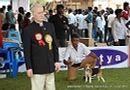 Chennai Dog Shows | beagle,