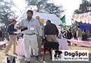 Dehradun Dog Show 2008 | Doberman,