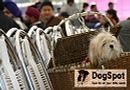 Dehradun Dog Show 2008 | apso,