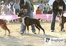 Dehradun Dog Show 2008 | boxer,