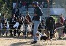 Dehradun Dog Show 2012 | beagle,sw-73,