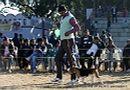Dehradun Dog Show 2012 | beagle,ex-64,sw-73,