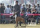 Gurgaon Dog Show | Boxer, Heart Breaker,