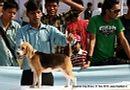 Guwahati Dog Show | beagle,ex-24,sw-9,