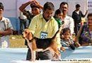 Guwahati Dog Show | beagle,ex-25,sw-9,