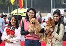 IKL Delhi 2012   chihuahua,pomeranian,