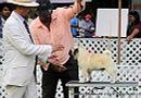 Jabalpur Dog Show 2 Nov 2014 | ex-6,pug,sw-127,