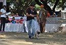Jabalpur Dog Show 2012 | ex-7,pug,sw-60,
