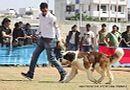 Jaipur Dog Show 2013 | ex-189,stbernard,sw-84,