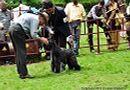 Kodaikanal Dog Show 2010 | kerry blue,