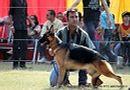 Lucknow Dog Show 2011 | ex-279,gsd,sw-43,