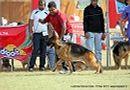 Lucknow Dog Show 2011 | ex-267,gsd,sw-43,