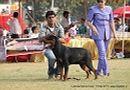 Lucknow Dog Show 2011 | ex-231,rottweiler,sw-43,