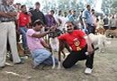 Meerut Dog Show | Boxer,