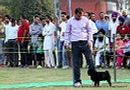 Mohali Kennel Club | ex-8,pug,sw-122,