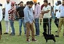 Mohali Kennel Club | ex-19,pug,sw-122,