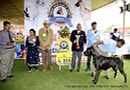 Ooty Specialities & All Breed Dog Show | line-up great dane speciality,