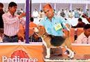 Orissa Dog Show | beagle,ex-38,sw-68,