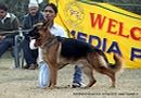 Rohilkhand Dog Show | ex-162,german shepherd,sw-74,