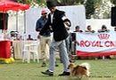 Vadodara Dog Show | ex-4,pomeranian,sw-83,
