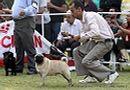 Vadodara Dog Show | ex-20,pug,sw-83,