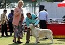 Vadodara Dog Show | ex-60,golden retriever,sw-83,