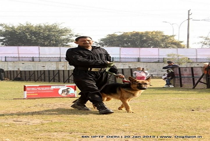 6th iiptf delhi,obedience show,, 6th IIPTF Delhi , DogSpot.in