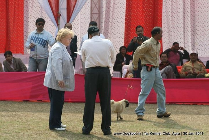 judges,sw-31,, Agra Dog Show 2011, DogSpot.in