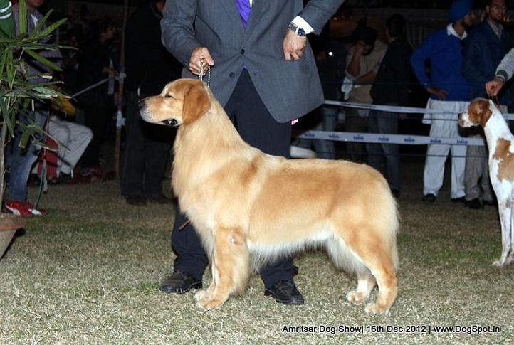 line up,sw-65,, Amritsar Dog Show 2012, DogSpot.in