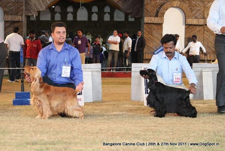 bangalore canine  club 2011, Bangalore Canine  Club 2011, DogSpot.in