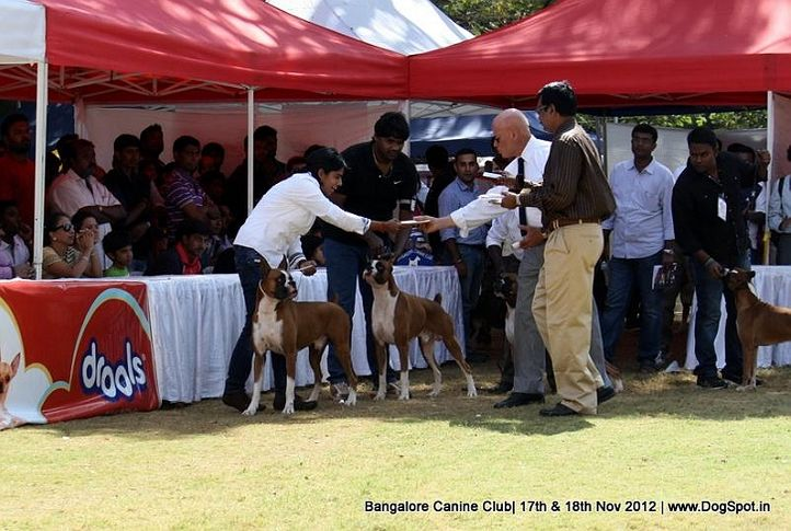 boxer,ex-265,judge,sw-69,, KARANHILS PARK ME IN FIRST, Boxer, DogSpot.in