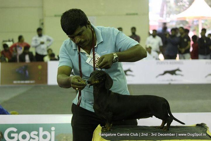 dachshund,, Bangalore Dog Show 2017, DogSpot.in
