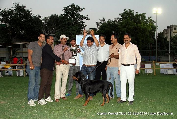 lineup,sw-128,, Capital Kennel Club - 2014 , DogSpot.in