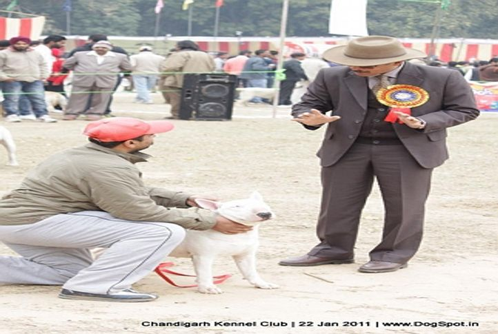 judges,people,sw-50,, Chandigarh 2012, DogSpot.in