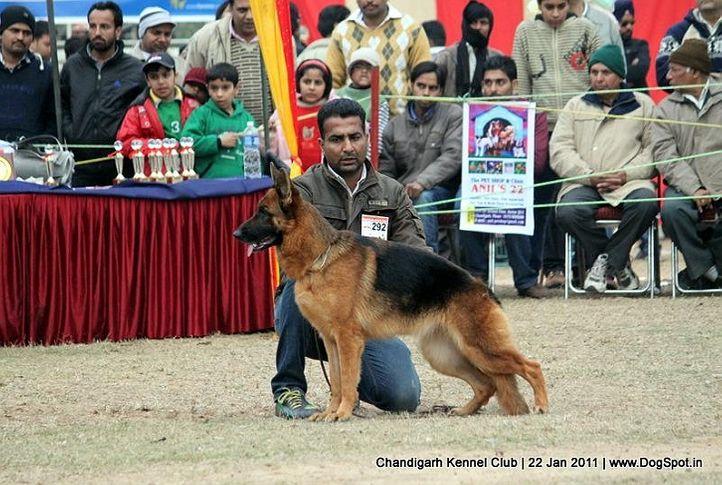 ex-292,gsd,sw-50,, SWAPNIL'S EMMY, German Shepherd Dog, DogSpot.in