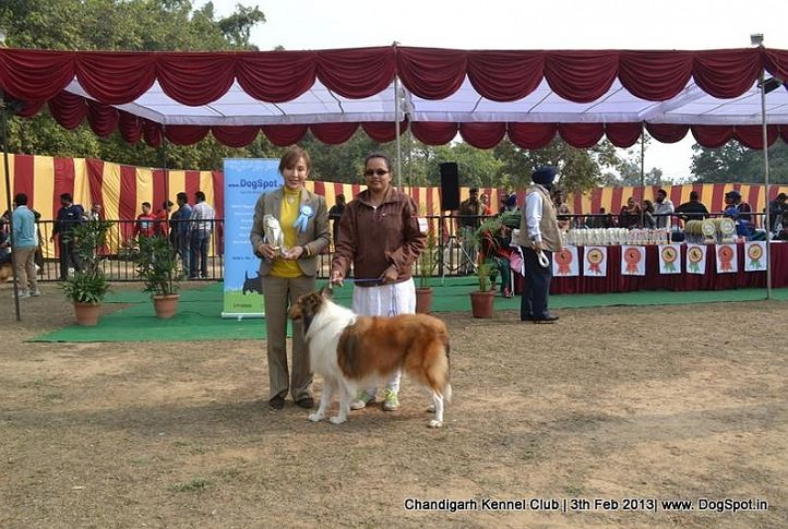 ex-307,rough collie,sw-75,, SHHESHEMANU, Rough Collie, DogSpot.in