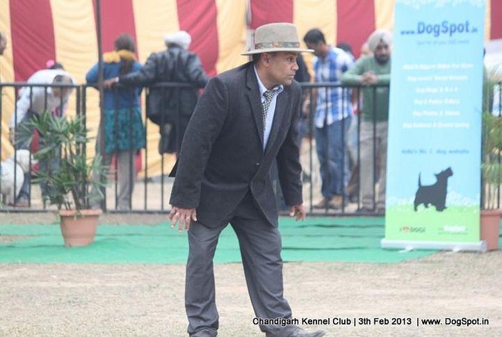 judge,sw-75,, Chandigarh Dog Show 2013, DogSpot.in