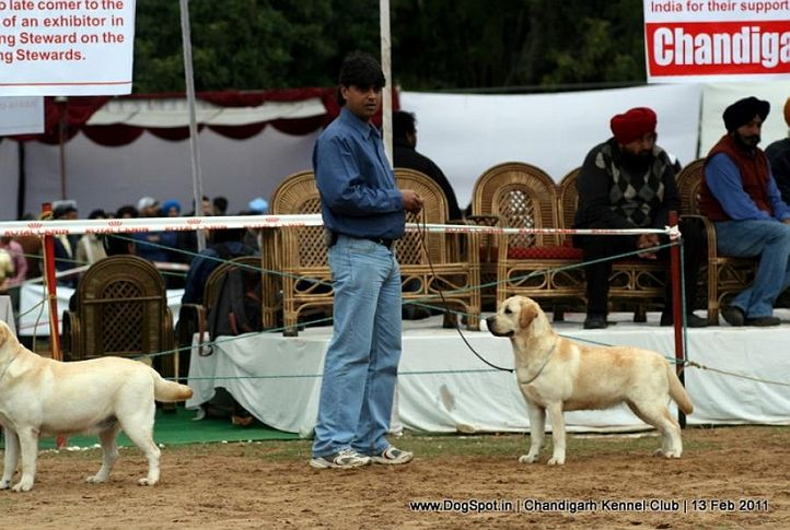 sw-35, cocker, Chandigarh Kennel Club 2011, DogSpot.in